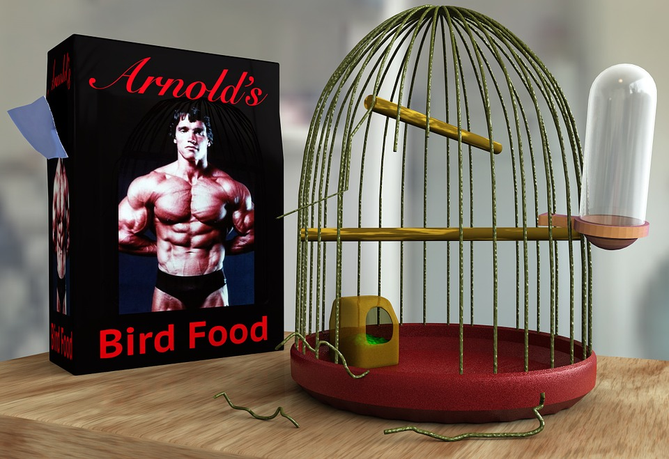 freedom selbstbestimmung free prison imprisoned lock up 3d rendered bird pet canary budgie parrot pet attitude caged cage bird cage birdcage grid lattice rod outbreak running away break out escapee search the wide smash rage freedom penetrated humor gag fun surprise unexpectedly unlikely food grains food additive table furniture interior tiled light arnold arni schwarzenegger hollywood body building body builder force power sports strengthening strong pack packaging design advertising freedom prison budgie caged birdcage rage humor arnold arnold arnold body building body builder body builder body builder body builder body builder strong