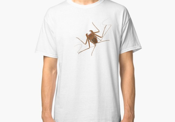 Amblypygi - Charinus israelensis - whip spider - tailless whip scorpion Classic T-Shirt